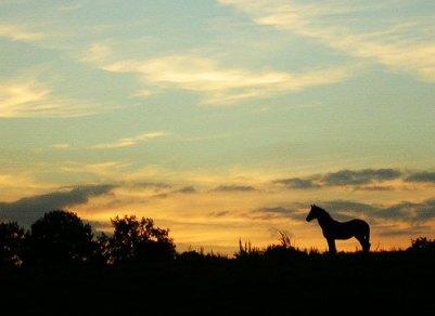 cavalo-selvagem, zenera's photostream