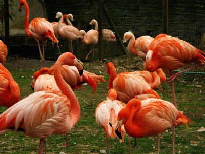 Flamingos-chilenos_Tanya-Volpe
