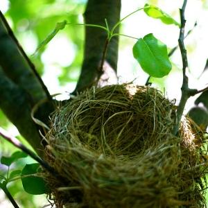 Empty Nest, de  Robert S. Donovan